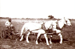 Horses pulling plow with man seated on plow